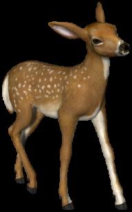 3D Deer Png