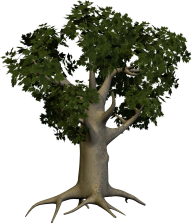3D Papaya Tree Png
