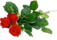 3red rose with leaves free png download