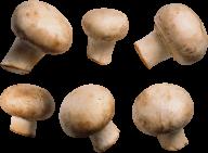 6 types mushroom free download png
