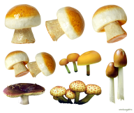 9 types of mushroom free download png