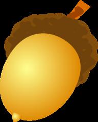 Acorn png drawn