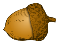 Acorn Png image Download for Designing