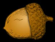 Acorn Png image Download for Designing