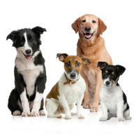 All Dogs Png