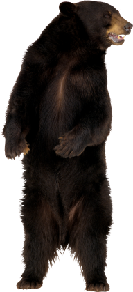 Angry Bear Png Image Free Download