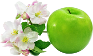 Apple Flower Png Free