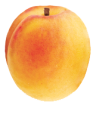 Apricot Clipart
