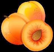 Apricot Drawn Clipart