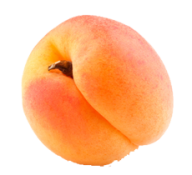 Apricot Png Icon Free Download
