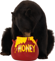 Bear Eating Honey Png Image