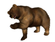 Bear Png Shake your Hands