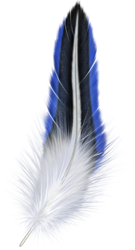 Beautiful Feather Png Download