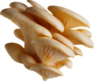 beauty petals mushroom free download png