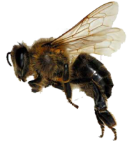 bee free png download