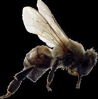 bee png download