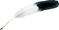 Bird Feather Png Image