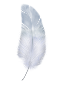 Birdy Feather Png Download