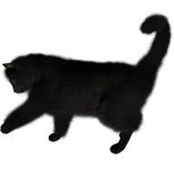 Black Cat Png Cliprt