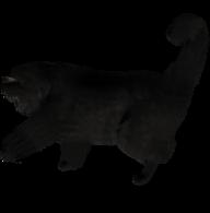 Black Cat Png Cliprt