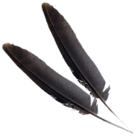 Black Png Feather download