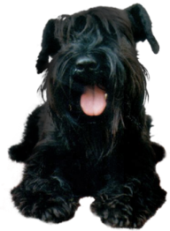 Black Puppy Dog Png