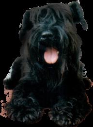 Black Puppy Dog Png