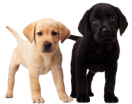 Blackand White Puppy Dogs Png
