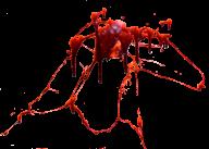 blood  splash on free png download