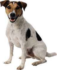 Brown Black and White Dog