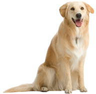 Brownish Dog Png