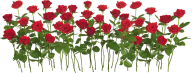 bunch of red rose with leaves free png download