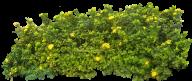 Bush PNG free Image Download 10