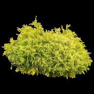 Bush PNG free Image Download 11