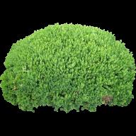 Bush PNG free Image Download 12