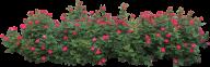 Bush PNG free Image Download 13