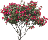 Bush PNG free Image Download 15