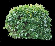 Bush PNG free Image Download 17