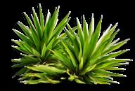 Bush PNG free Image Download 19