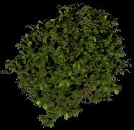 Bush PNG free Image Download 2