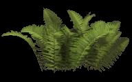 Bush PNG free Image Download 21