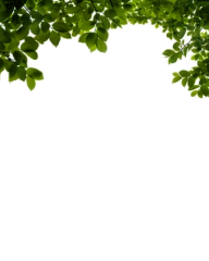 Bush PNG free Image Download 23