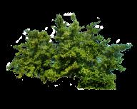 Bush PNG free Image Download 24