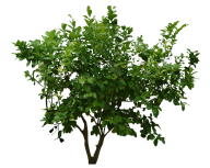 Bush PNG free Image Download 25