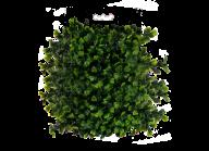 Bush PNG free Image Download 26