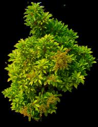 Bush PNG free Image Download 28