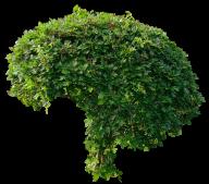 Bush PNG free Image Download 29