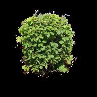 Bush PNG free Image Download 30