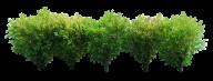 Bush PNG free Image Download 4