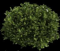 Bush PNG free Image Download 9